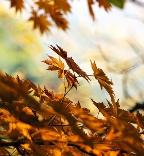 autumn-507544_640